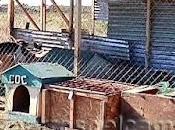 Refugio perros, Maullín
