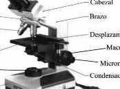 Microscopio óptico compuesto