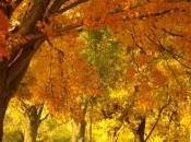 trucos para afrontar otoño