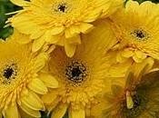 Amarillo quiero amarillo