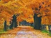 Empezamos otoño, creo mejor estación, gusta!