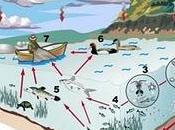 Efectos secundarios pescado azul: mercurio