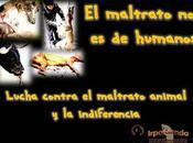 Campaña contra Maltrato Animales: maltrato humanos
