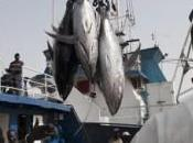 laberinto ausencia (30): acuerdos pesca.