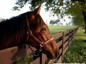 Curiosidades caballos