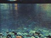 Caribou Island, David Vann