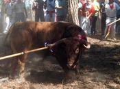 fiesta toro