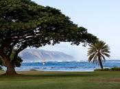 Reef Hawaiian 2011