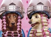 Animal trends,la ropa nuestras mascotas
