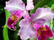 orquídea, flor misteriosa exótica