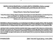 Trabajos investigación publicados recientemente autor: Nueva localidad para gallareta cornuda (Fulica cornuta) Región, Antofagasta, República Chile