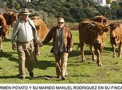 "Carmen poyato: toro sabiduría"""