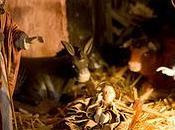 Navidad, niños origen belén
