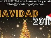 """Concurso Quiero Christmascota"""""""