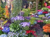 mercado flores Ámsterdam