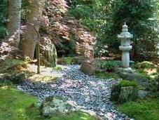 Musgo jardín