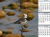 Calendario 2012 Primer trimestre