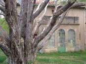 Árboles Singulares Huesca Ciprés Plasencia