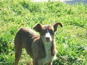 Perro abandonado herido calle. (Jerez)