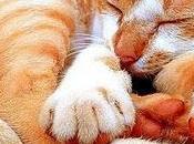 Vida gato, vida reyes