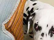 maltratadores animales persiguen coaccionar propia familia