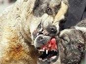 Perros caza, ¿perros pelea? (Julio Ortega)