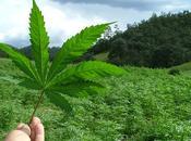 sanidad vasca propone tratamiento para frenar adicción cannabis