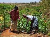 reciente fiebre tierra África: Repercusiones acaparamientos para derechos mujeres