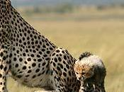 Safari días Kenya para 2012