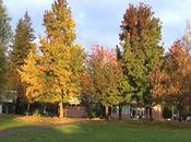 Especies árboles