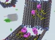 Nanorobots caza células leucémicas