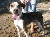 Rufino. meses. cruce beagle. sevilla