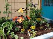 Jardineras imporvisadas: planta recicla