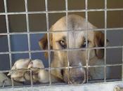 Urgentisimo, ayuda para mastina perrera tiempo, sacrifican.
