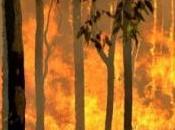 calentamiento global traerá incendios forestales
