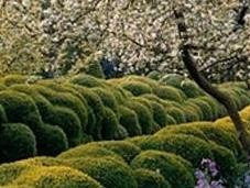 Jardines escultóricos verde)