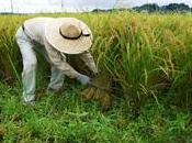 pequeños agricultores podrían tener mayor acceso créditos bajo interés