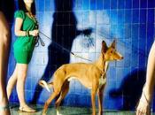 Perros modelos modelicos