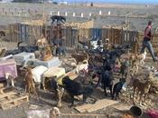 """Piden ayuda para perros punto morir hambre"""" Fuerteventura"""