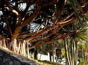 jardín botánico palmeras