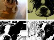 Pierre, Bulldog