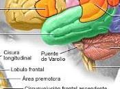 Retinopatía enfermedades Cerebro