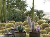 Jardín cactus