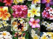 Flores primavera: Azaleas, Narciso, Tulipanes Jacintos